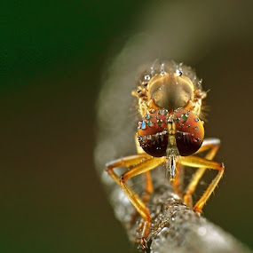 rf by Lanun Syah - Animals Insects & Spiders ( macro, animals, art, insects, close up )