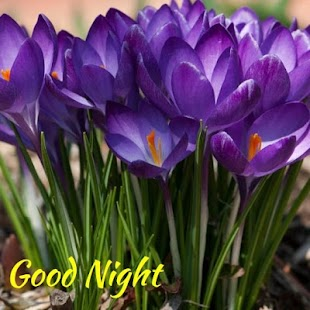 App Good Night Beautiful Flower APK For Kindle