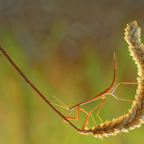my way by Said  Ikhsan - Animals Insects & Spiders ( macro, nature )