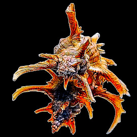 Air Brushed Sea Shell Monster by Dave Walters - Digital Art Things ( macro, abstract, lumix fz2500, sea shell, colors, digital art )