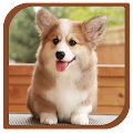App Dog and cute puppies apk for kindle fire