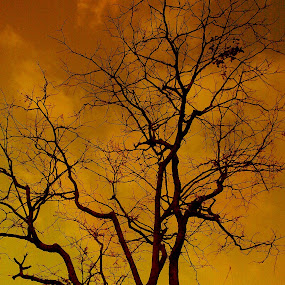 Haunted Tree by Iwan Siswanto Setiaonebudhi Nugraha - Instagram & Mobile Other