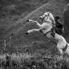 Try to Fly by Andy Kurniawan - Animals Horses ( #java #people, #bromo #jawa #indonesia #kuda #horses #animals #momment )