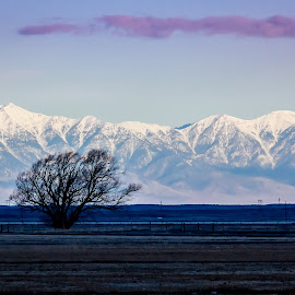 Early Morning by Dave Lipchen - Landscapes Mountains & Hills ( mountains, tree, landscape, snow covered )