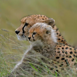 Cheetah and her baby by Janet Rose - Novices Only Wildlife