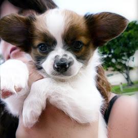 by Austin Lubetkin - Animals - Dogs Puppies