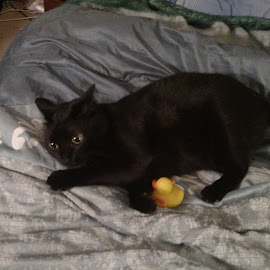 With her duck by Leah Bennett - Animals - Cats Portraits