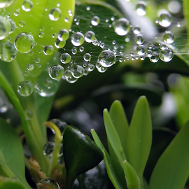 by Ad Spruijt - Nature Up Close Natural Waterdrops