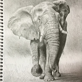 Elle by Cary Leabeater - Drawing All Drawing ( elephant )