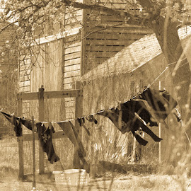 Out to Dry by Sheryl Mayhew Smith - Landscapes Prairies, Meadows & Fields ( hanging, farm, outtodry, clothesline, farmlife )