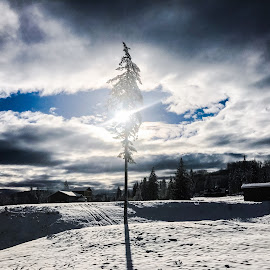Snowday by Tanya Neely - Novices Only Landscapes ( clouds, no people, snow, sunbeam )