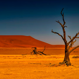 The trees....  by Stanley P. - Landscapes Travel ( sand, namib, tree )