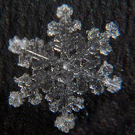 macro snowflake 3 by Kevin Adams - Nature Up Close Water