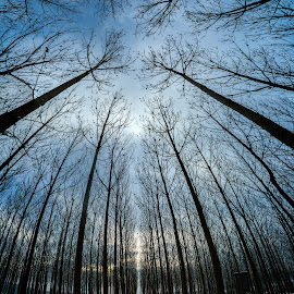 Araf by Selçuk Gülen - Landscapes Forests ( sky, ground, nikkor, trees, forest, nikon, panoramic, panorama )