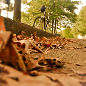 From the Gutter  by Sawyer Jones Photography  - City,  Street & Park  Street Scenes ( orange, road, landscape, leaves, print, bike, paths, nature, fall, heart warming, weather, trees, streets, outside )