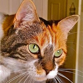 { Snoopy ~ Heard a noise by window }  by Jeffrey Lee - Animals - Cats Portraits ( { snoopy ~ heard a noise by window }  1 august 2015 )