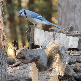 When do I eat???? by Carolyn Kernan - Animals Other Mammals (  )