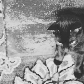 Thoughts by Brian Melendrez - Animals - Cats Portraits ( playful, moms house, deep thinking, carpet, cute )