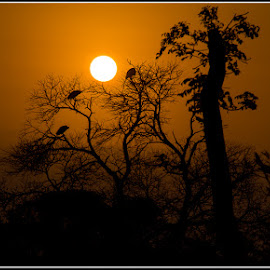 Sunrise in Africa by Eugene Dopheide - Landscapes Sunsets & Sunrises ( sunrise, africa, golden hour )