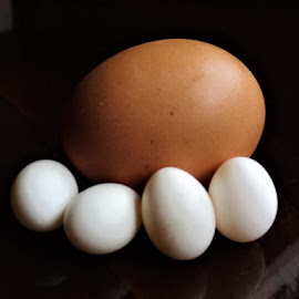 by Dragan Peric - Food & Drink Ingredients ( eggs, parrot )