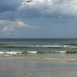 Gulls over the Beach by Kristine Nicholas - Novices Only Landscapes ( clouds, bird, water, gull, sand, sky, waves, tide, sea, ocean, beach, birds, gulls )