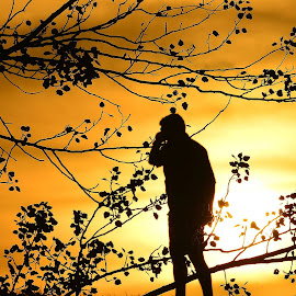 Man with a mobile in the sunset by Mihail Nastase - People Street & Candids ( sunset, mobile photos, artistic, trees, yellow, man, sun )