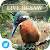 Live Jigsaws - Aviary Free file APK Free for PC, smart TV Download