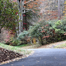 Scenic Route  by Lorraine D.  Heaney - City,  Street & Park  City Parks