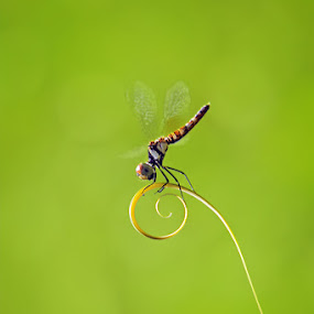 twirl by Tele Nicotin - Animals Insects & Spiders