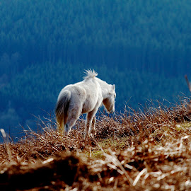 by James Blyth Currie - Animals Horses
