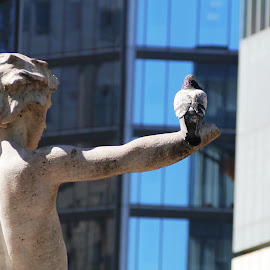 The Statue & The Dove by Joatan Berbel - Buildings & Architecture Statues & Monuments ( statue, colors, architectural detail, artistic objects, city park, dove )