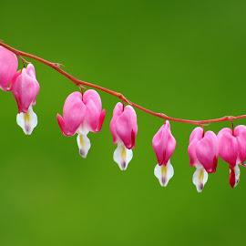 by Jess Baldacci - Flowers Flower Gardens