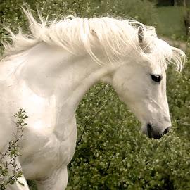 by Deanna Ramsay - Animals Horses