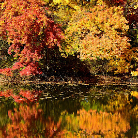 Autumn Reflections by Carl Testo - Landscapes Forests ( autumn, reflections, pond )