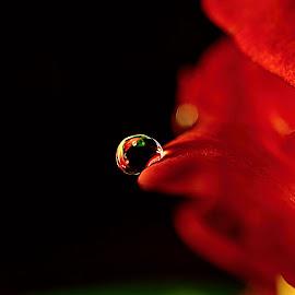 Color drop by Standásek Hrubý - Nature Up Close Natural Waterdrops ( red, nature, drop, emotions, black )