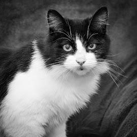 by Jonny Fisher - Black & White Animals