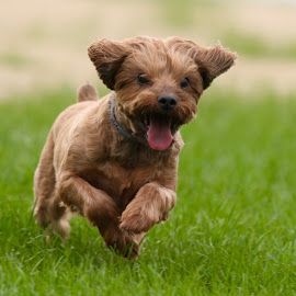 Running For A Purpose by Mike Craig - Animals - Dogs Running