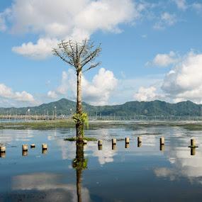 view of the Tondano lake... by Bop Aurelio - Landscapes Prairies, Meadows & Fields