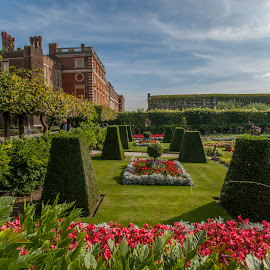hampton court palace by Yordan Mihov - City,  Street & Park  Historic Districts ( sony, park, minolta, alpha, court, hampton, palace )