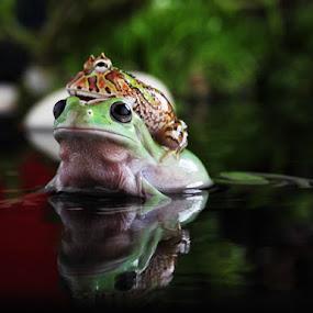 by Efendi Yusuf - Animals Amphibians
