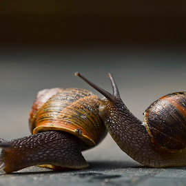 Snailes in Love by Wendy Faber - Novices Only Macro