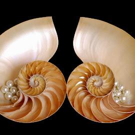 broken heart by Adjie Tjokrosoedarmo - Artistic Objects Still Life ( pearls, seashell, sea, nautilus )