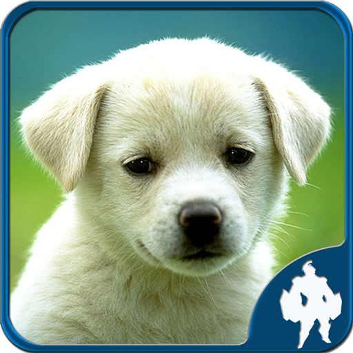 Animal Jigsaw Puzzles (game)