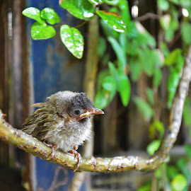 hanging out by Shreya Bansal - Novices Only Wildlife ( bird, green, outdoor, plants, learning, baby,  )