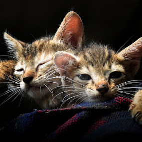 Geser dikit donk by Abbiel Tonny - Animals - Cats Playing