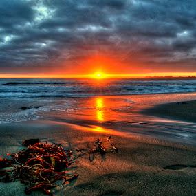 Seacliff State Beach No.11 by George Krieger - Landscapes Beaches ( seacliff, kelp, california, state beach )