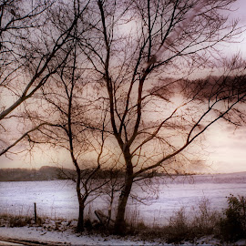Snow at sunset by Kelly Murdoch - Landscapes Weather ( winter, ztam photography, cold, sunset, snow, trees, isle of wight )