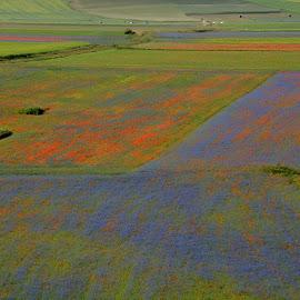 Castelluccio 13 by Bruno Brunetti - Landscapes Prairies, Meadows & Fields ( colors, flowers, italy, castelluccio, fields,  )