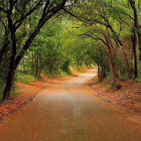 Down The Road by Jim O'Neill - Landscapes Forests ( fall, texas, forest, landscape, country road )