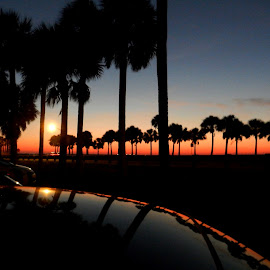 Sunset Reflection by Kathy Rose Willis - Landscapes Sunsets & Sunrises ( car, orange, reflection, blue, silhouette, sunset, palm trees, black )